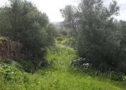 Arrenda terreno agricola