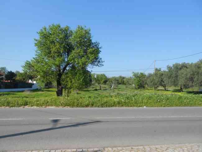 Terreno rústico plano junto à estrada com 2 frentes grandes