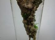 Ilha pedra flutuante lightstone (avatar) aquário