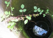 2 ha com agua p agricultura en vagos