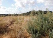 Terreno rustico arrendamento em almoster santarem en santarém