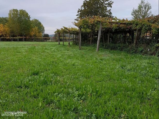 Terreno rustico para arrendamento Vila Verde Ribeira do Neiva