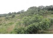 Alugo terreno agricola em Colares 11 000 m2