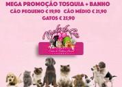 Gatos - tosquia banho unhas ouvidos 25.90€