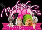 Mega promoçãotosquiacom banho cão pequeno €19,90