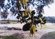 Terreno para colmeias en serpa