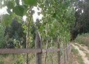 3 ha p projeto agricola en vagos