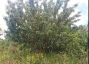 Oportunidade!. terreno agricola com cerejeiras alcaide fundao