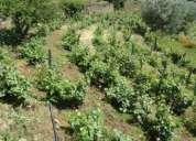 Arrendamento Terrenos Projecto agricola. Contactarse.