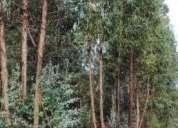 Excelente terreno c eucaliptos